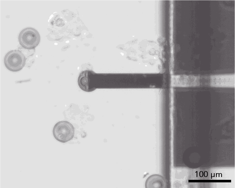 AFM application - Colloids of 60 µm are picked with a FluidFM micropipette a
