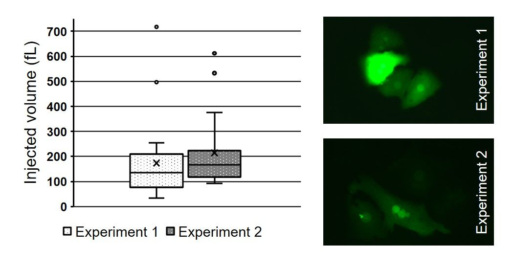Fluorescent CRISPR-Cas9 complexes injected into mouse primary hepatocytes with the FluidFM Bio-CRISPR.
