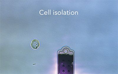 Cell isolation