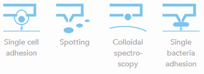 AFM applications - single cell adhesion, spotting, colloidal spectroscopy, single cell bacteria adhesion