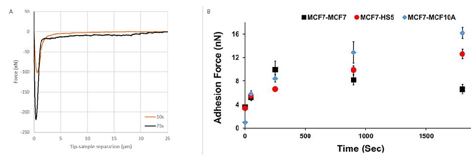 FluidFM Mechanobiology - Cell-cell adhesion (Data/image courtesy of Tanya Konry group, Northeastern University, Boston, USA)