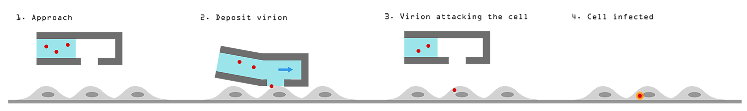 FluidFM Virology - Working principle of viral manipulation with FluidFM