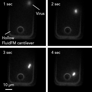 A single virion is being pushed through a FluidFM cantilever. Image courtesy of P. Stiefel, ETH Zurich.