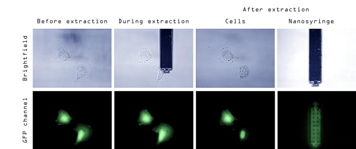 FluidFM Neuroscience - FluidFM cell extraction series. Courtesy Orane Guillaume-Gentil, ETH Zurich.